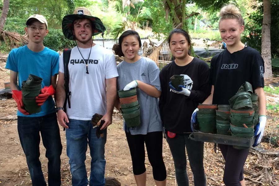 Seniors worked to clear coqui frog habitat at the Kihei Nursery in Wailuku on Community Day, which was Friday, October 28.