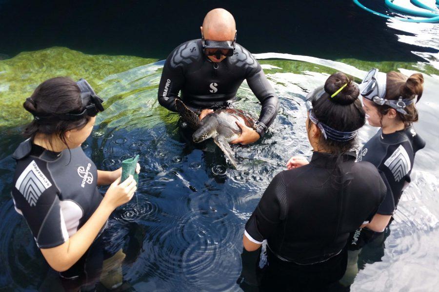 Seabury Upper School students got up close and personal with marine wildlife during the Aquarium Winterim.